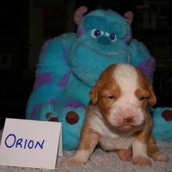Orion at 17 days (white boy)