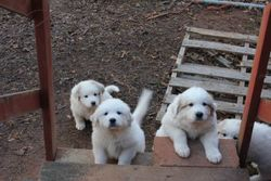 Trying to climb the steps