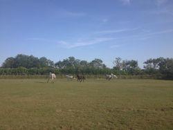 Enjoying the field