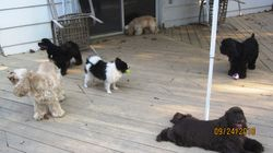 My Crew on the deck
