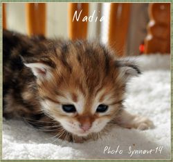 Nadia 3 weeks