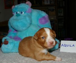Aquila (orange boy)