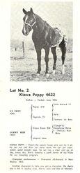 Kiowa Peppy