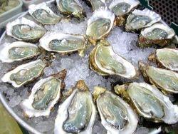 Dee aka Oyster