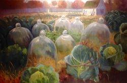 Cabbage and Cloche