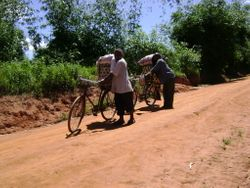 Two men moving heavy loads by bicycle to market