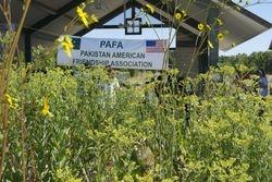 PAFA picnic 2013