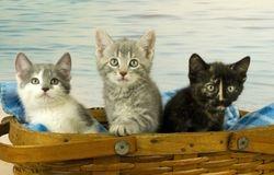 Petra, Mimi and Fern