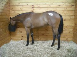 Stravinsky Top Price Select Filly 2006