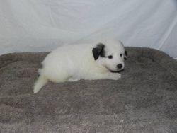 eva - f3 - 01 - audrey's pup