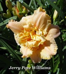 Jerry Pate Williams