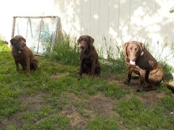 Dixie, Maggie and Grace