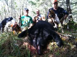 Group effort. 200 pound boar