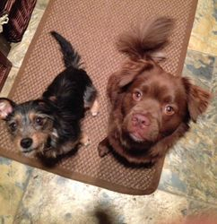 Daisy FKA Thistle and Teddy
