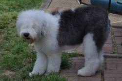 Bristol 5 months old