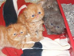 Tartans babies 2012