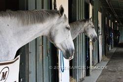"""Luck"" Horses Wait for New Homes"