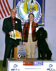 Maxwell with new CD title and winning third place at PCA National Specialty.  4/21/09.