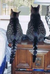 Snaffi & Schura, 2008