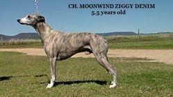 Ziggy 5.5 years old