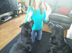 Monica with twin black labs