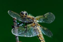 Dragonfly Watching Me by Judy Lathrop (HM)