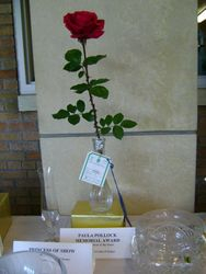 Best Red  Rose