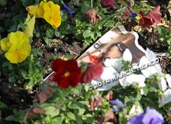 Lady in the Flowerbed