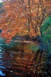 Lake Elkhorn 1