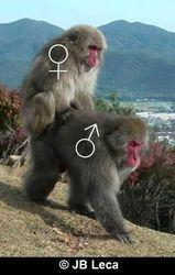 female-male mounting (sitting posture, Arashiyama)