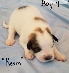"""Boy 4 - """"Kevin"""""""