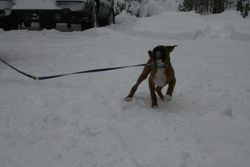 Catching a snowflake or being  a pup?