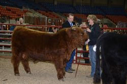 Yukon Jack receives the Reserve Grand Champ award