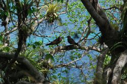 Birds on Baradel island