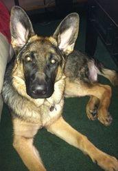 Malachi (6 months)
