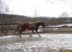 Relaxed canter- Next time? Irons down!