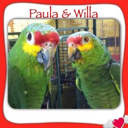Willa and Paula-Pending Adoption