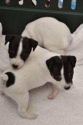 LuLu's pups