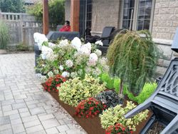 Little garden concept