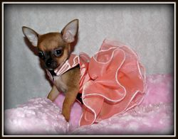 Rosie/Chalupa baby