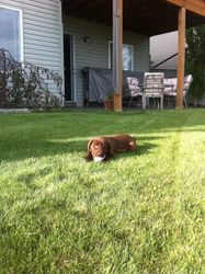 Mable at her new home