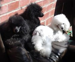 Barbarella, Ziggy and Gracie relaxing in the sun