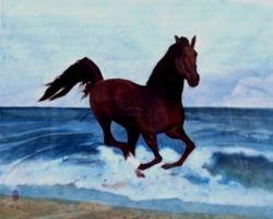 Black Stallion Backing from Sea
