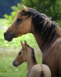 Mare and foal at David's house
