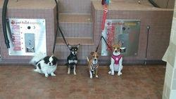 Beau, Boomer, Chili, & Lily