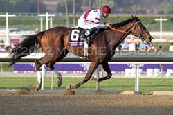 Royal Delta wins her second BC Ladies' Classic