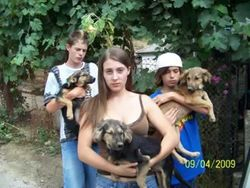 Before:  Kids a little upset - Kerry and Jasper, Liam and Muis, Luke and Shadow