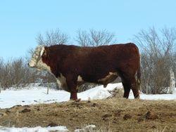 DBHR 4S winter 2011