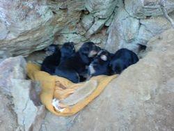 8 little pups