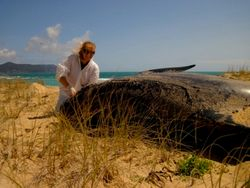 Taking samples of stranded pilot whales at Spirits Bay